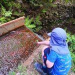 Waldgruppe Entdeckungstour